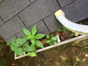 Clogged Gutters Paducah