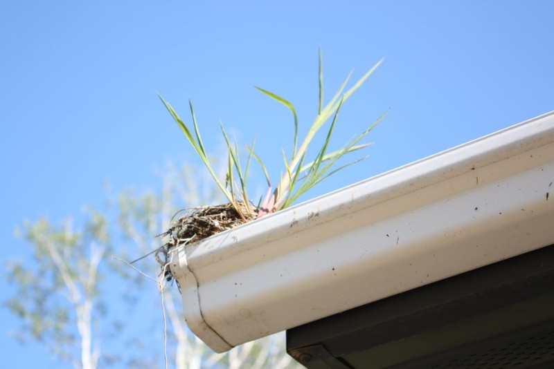 How To Keep Bird Nests Out Of Your Gutters